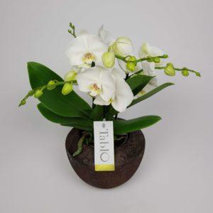 Orchidee Wit Tablo Crea-fleur
