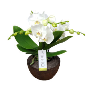 Orchidee wit TablO