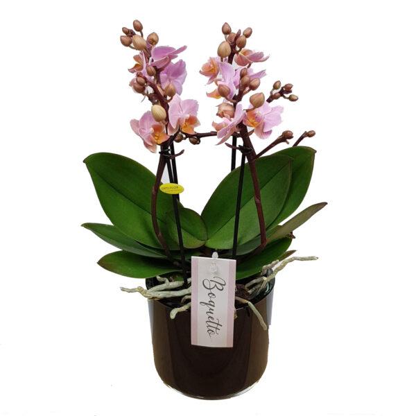 Orchidee roze Boquetto