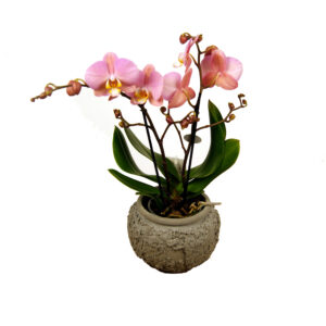 Orchidee roze Tablo