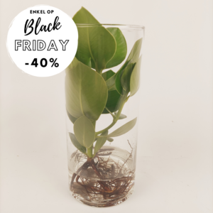 Groen in glas black friday