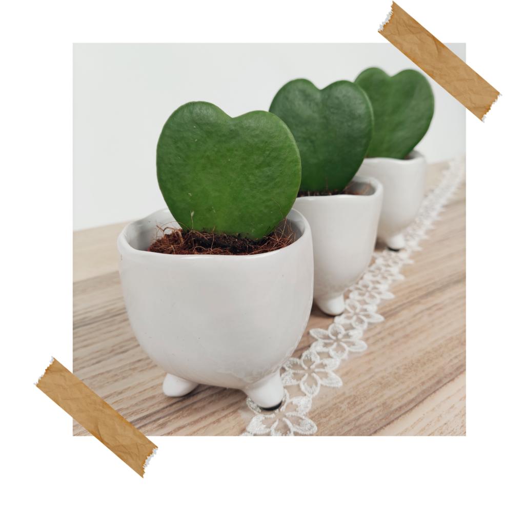 Hartplanten