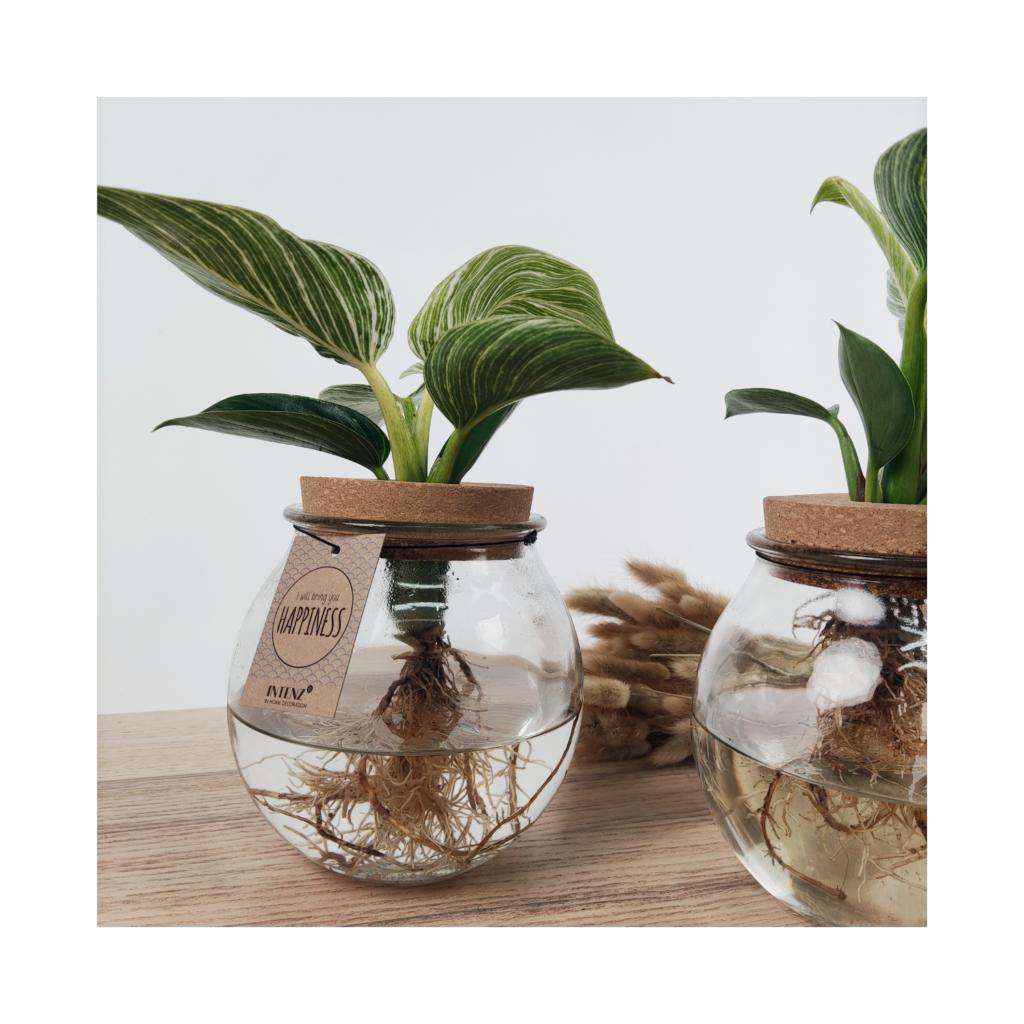 Planten (website)