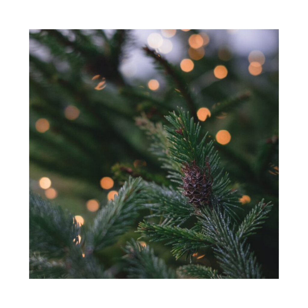Waar je best op let bij het kopen van een echte kerstboom