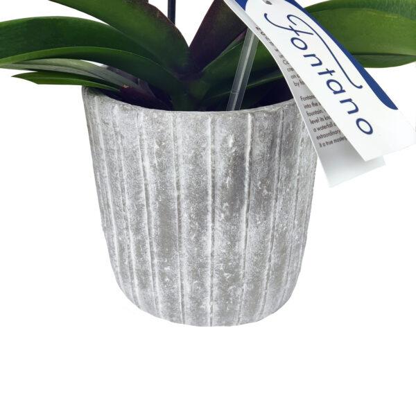 Fontano witte orchidee bloempot