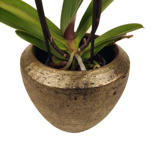Maistro orchidee bloempot