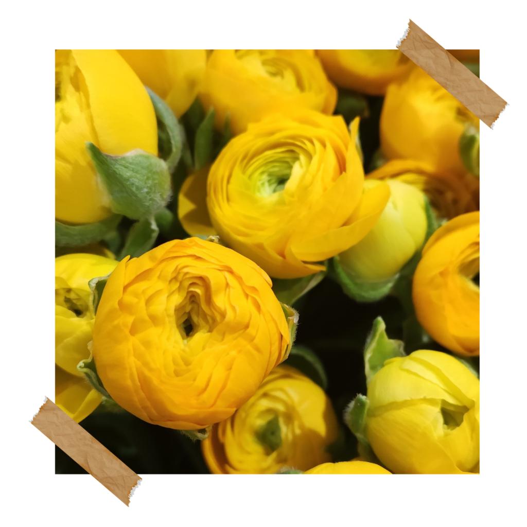 Gele ranonkels