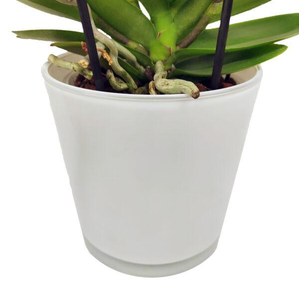 Orchidee Groen Boquetto 3 takken met bloempot - bloempot