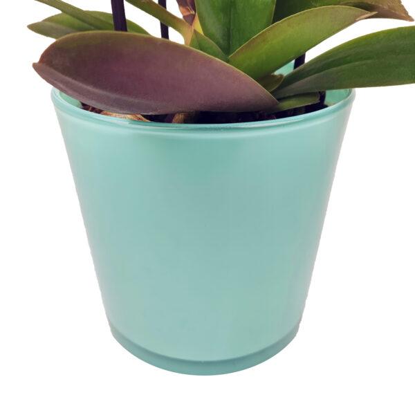 Orchidee Wit Boquetto 3 takken met bloempot - bloempot