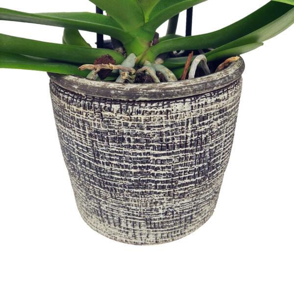 Orchidee Wit Optimal Care 2 takken met bloempot - bloempot