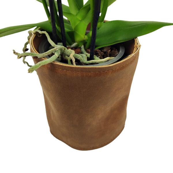 Orchidee Wit 3 takken_bloempot