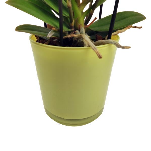 Orchidee Wit Boquetto 5 takken met bloempot_bloempot