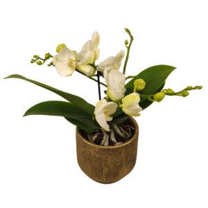 Orchidee Wit TablO 2 takken met bloempot_bloem met bloempot