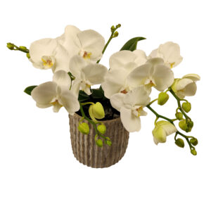 Orchidee Wit TablO 3 takken_bloem met bloempot